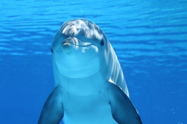 """Museu de Ciències Naturals de Barcelona zaprasza na wystawę """"Oceany, ostatnie dzikie terytorium"""", lipiec 2018 w Barcelonie"""